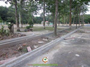 Cây Xanh Gia Nguyễn, cây công trình, công trình, khuôn viên, cây