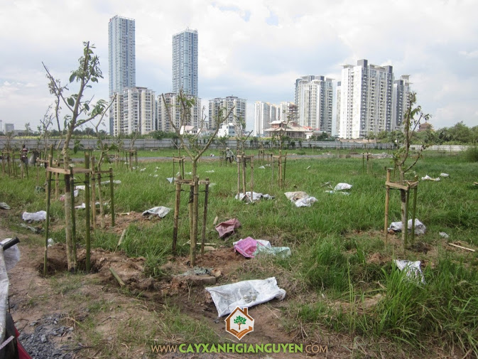 Trồng cây tại khu đô thị An Phú.