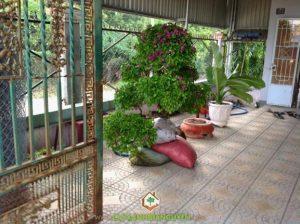 Cây Xanh Gia Nguyễn cung cấp cây giống công trình cho khách hàng.