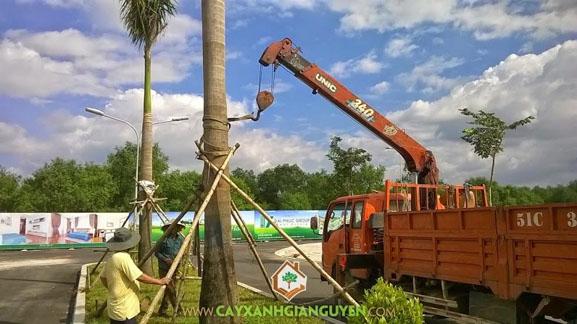 cây công trình, kỹ thuật trồng, cảnh quan, cây xanh, tro trấu, rơm mực, bột dừa, phân chuồng