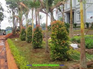 cây xanh Gia Nguyễn, cây công trình, vườn ươm cây xanh Gia Nguyễn, cung cấp cây công trình, cây giống công trình
