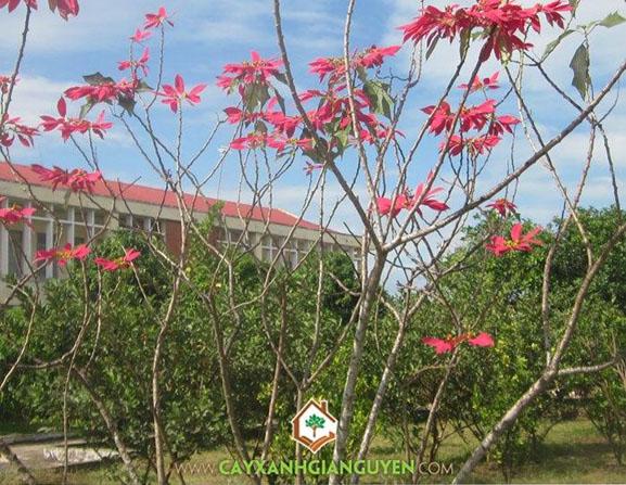 cây hoa bụi, cây công trình, cây mỏ két, cây hoa lài, cây hoa thảo, cây trạng nguyên, cây quỳnh anh