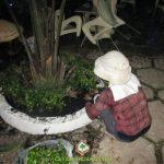 KỸ THUẬT TRỒNG CÂY TRONG CHẬU