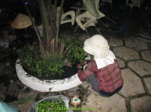trồng cây trong chậu, kỹ thuật trồng cây trong chậu, kỹ thuật trồng, chọn cây, chọn chậu, kỹ thuật làm đất