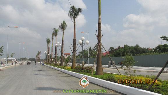 cây cau, khu dân cư, khu công nghiệp, cây xanh, cây xanh Gia Nguyễn, công viên