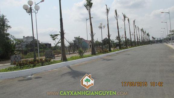 Cây xanh, cây xanh công viên, khuôn viên cây xanh, công viên, cây bóng mát