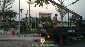 cay-xanh-gia-nguyen-bung-bang-dai-loan-cho-cong-vien-dai-phuc-1