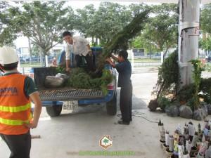 Cây Xanh Gia Nguyễn, Cây Ngọc Trai, Cây Tùng Bút, Cây cảnh Ngọc Trai, Khuôn viên cây xanh