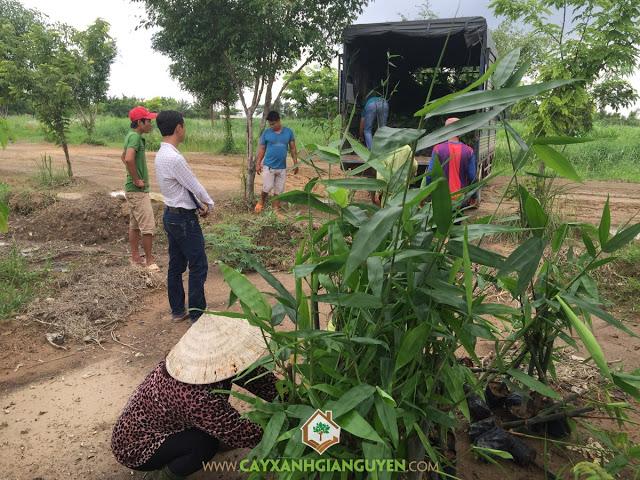 Cây Xanh Gia Nguyễn, Khu du lịch Sinh Thái Sơn Tiên, Trồng bơ sáp da xanh, Cây Sao Đen, Cây Hắc ó
