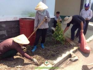 Vườn ươm Cây Xanh Gia Nguyễn, Cây hồng lộc, Cây giáng hương, Cỏ đậu phộng, Cây công trình