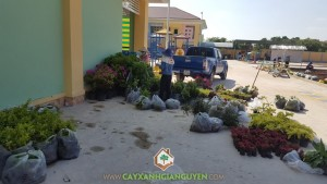 Cây giống, Chăm sóc và bảo vệ cây xanh, Cây Dền Đỏ, Cây Lá Trắng, Cây Thạch Thảo