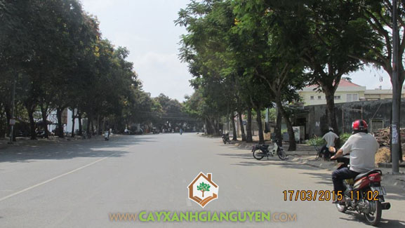 Cây xanh, cây xanh Gia Nguyễn, công ty cây xanh Gia Nguyễn, khu dân cư, công trình, khu dân cư Bình Lợi